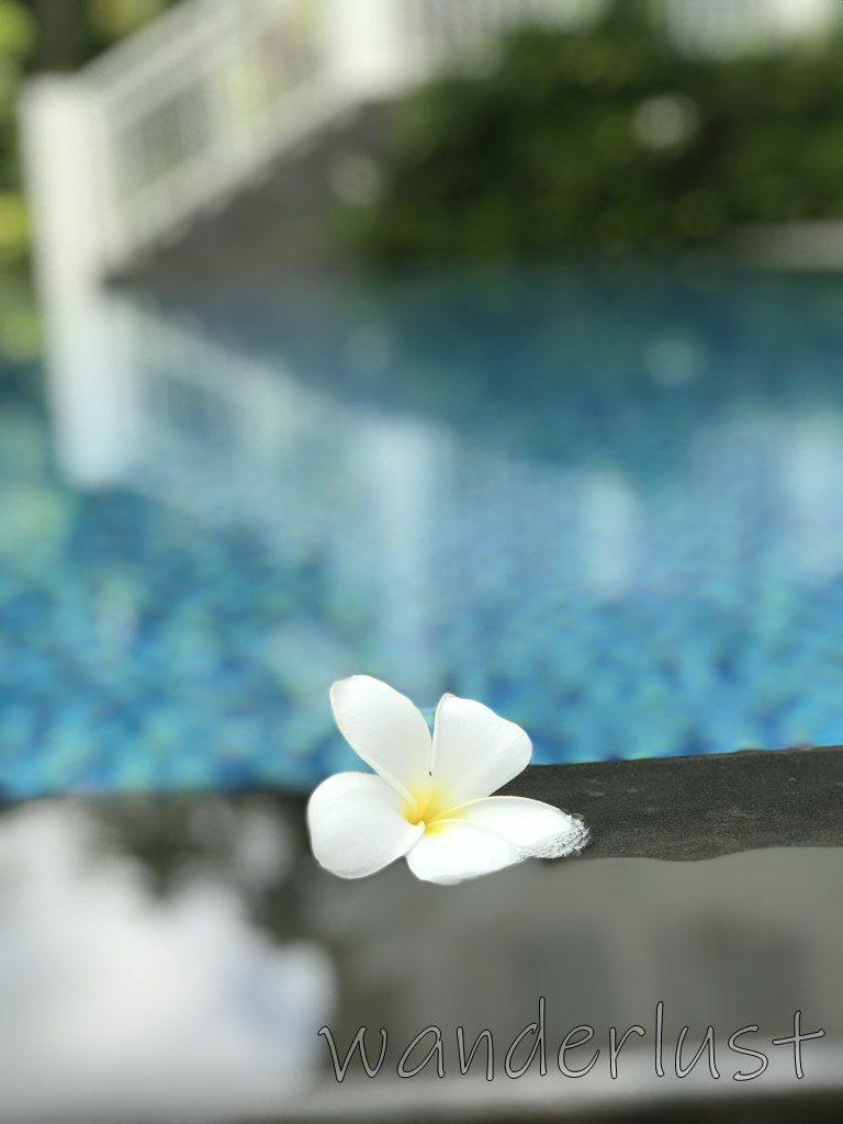 花とプール